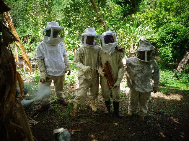 apicultura 2