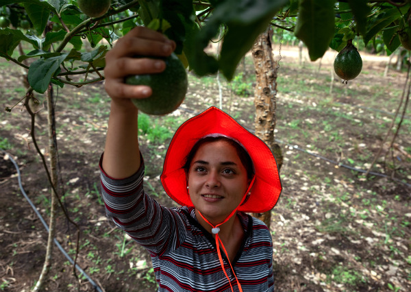 The Young Farmers of Jalapa: Milady